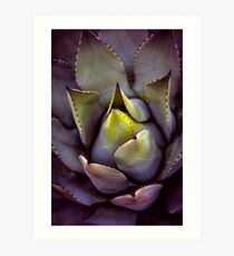 A succulent looking extra succulent this morning...  Art Print