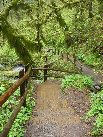 Go Where The Path Leads by Jess Meacham