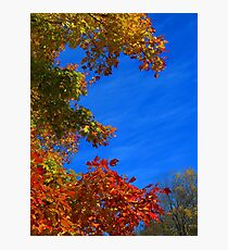 Rainbow Trees Photographic Print