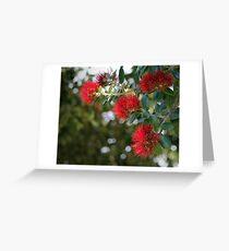 Pohutakawa Flowers, New Zealand Greeting Card