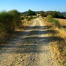 Tuscany, Italy, Arezzo Region by newbeltane