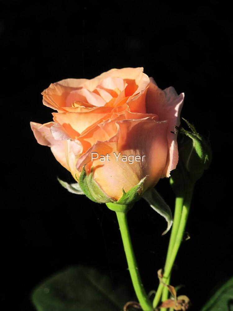 Rosebud Sunset Celebration by Pat Yager