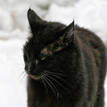Black Cat, White Snow - FeralKittens.Org by Pagani