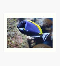Nemo Lookalike Art Print