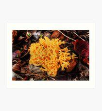 Yellow Fungus Art Print