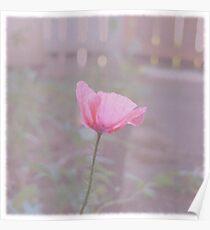 Vintage Poppy Poster