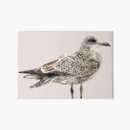 Brighton Gull Art Board Print