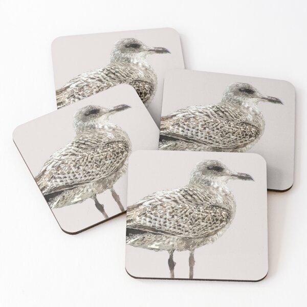 Brighton Gull Coasters (Set of 4)