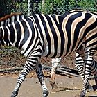 Seven Legged Zebra lol...... by lynn carter