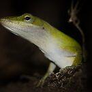 Gecko? by vasu