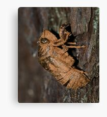 Insect covered in mud! Canvas Print