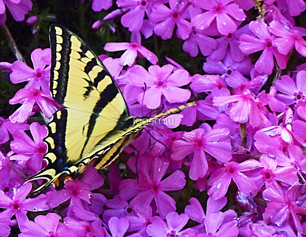 Flutterby the Flowers © by jansnow