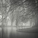 Winter in the Park  by Christine Wilson