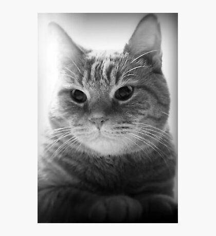 My Handsome Kitty Cat Photographic Print