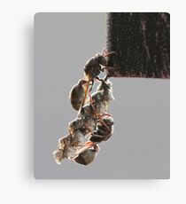 Paper Wasps Canvas Print