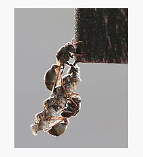 Paper Wasps Photographic Print