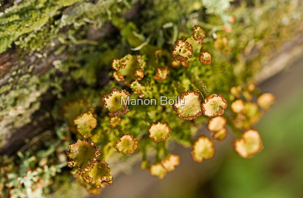 the lichen by Manon Boily