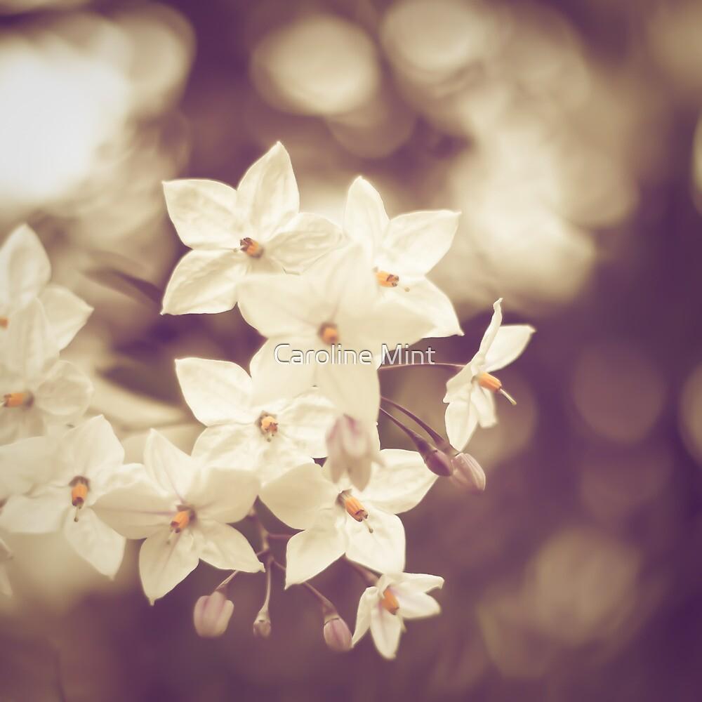 Vintage White Flowers by Caroline Mint