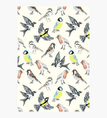 Illustrated Birds Photographic Print