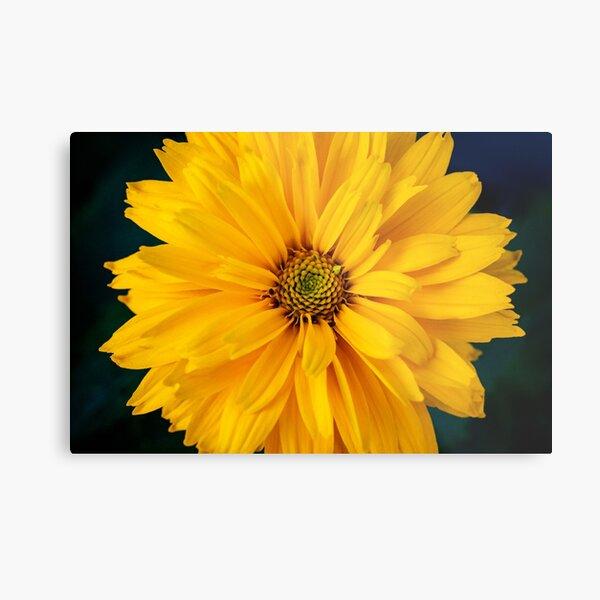 False Sunflower Metal Print