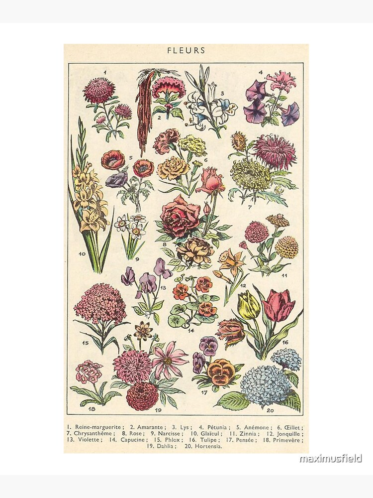 vintage flowers by maximusfield