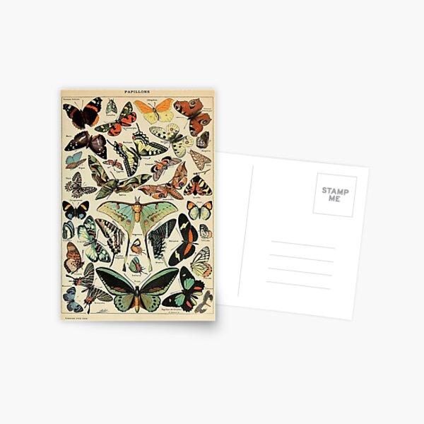 mariposas y polillas vintage Postal