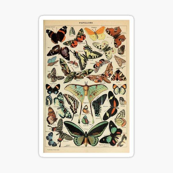 vintage butterflies and moths Sticker