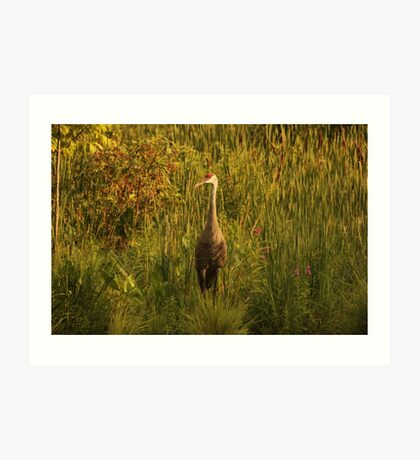 Sandhill Crane Standing on Shoreline Art Print