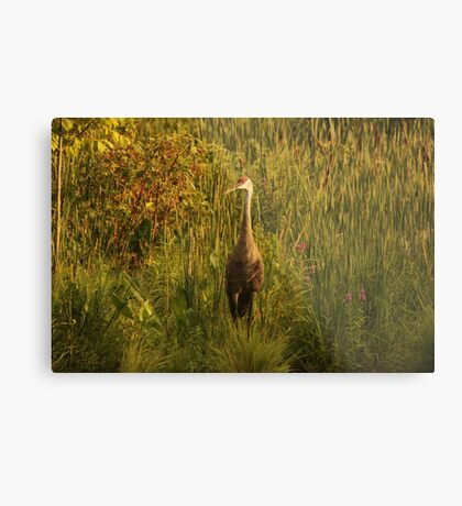 Sandhill Crane Standing on Shoreline Metal Print