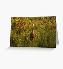 Sandhill Crane Standing on Shoreline Greeting Card