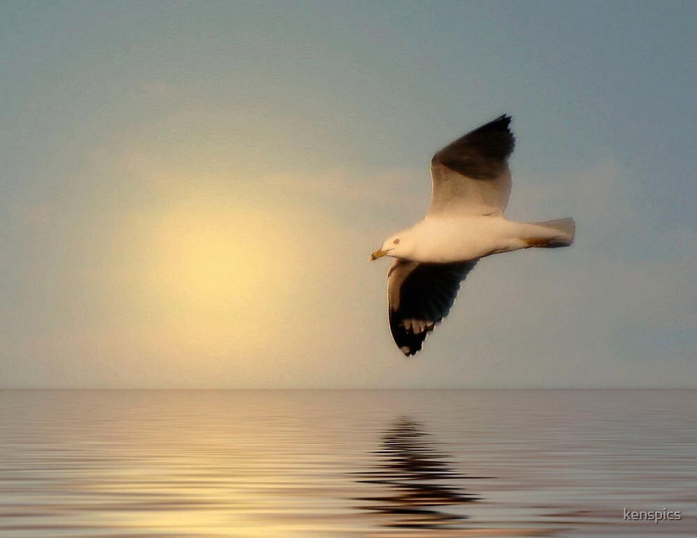 Seagull in Flight - #1 by kenspics