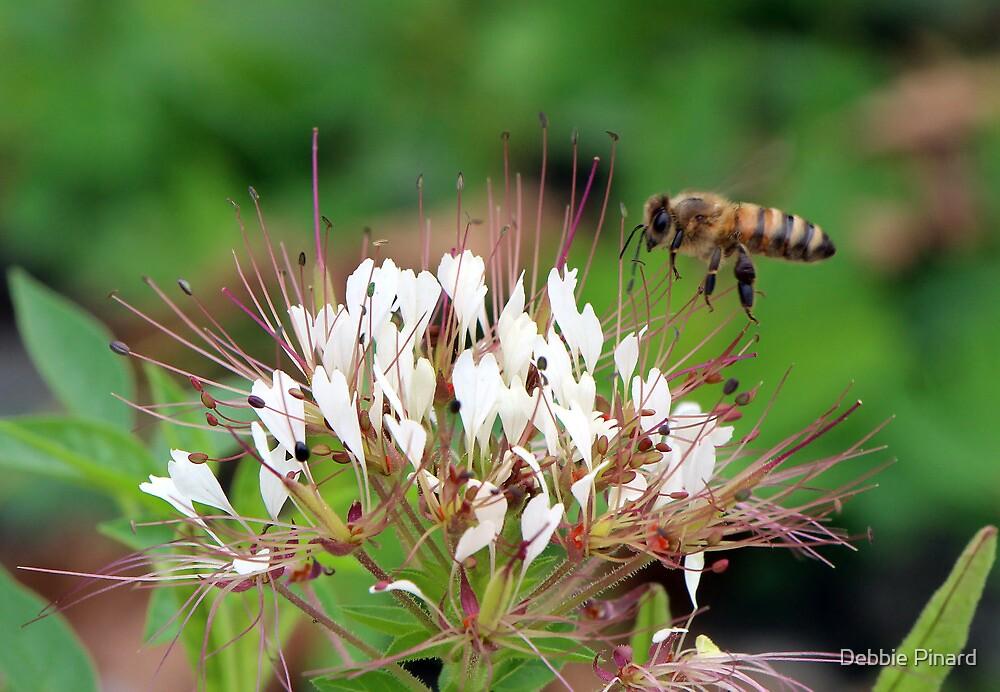 Honey Bee Gathering, Dunrobin Ontario by Debbie Pinard