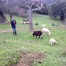 Traditional Shepherd by Random Artist No. 2