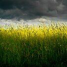Just Light by photosbytony