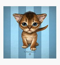 Cataclysm - Abyssinian Kitten - Turquoise Stripes Photographic Print