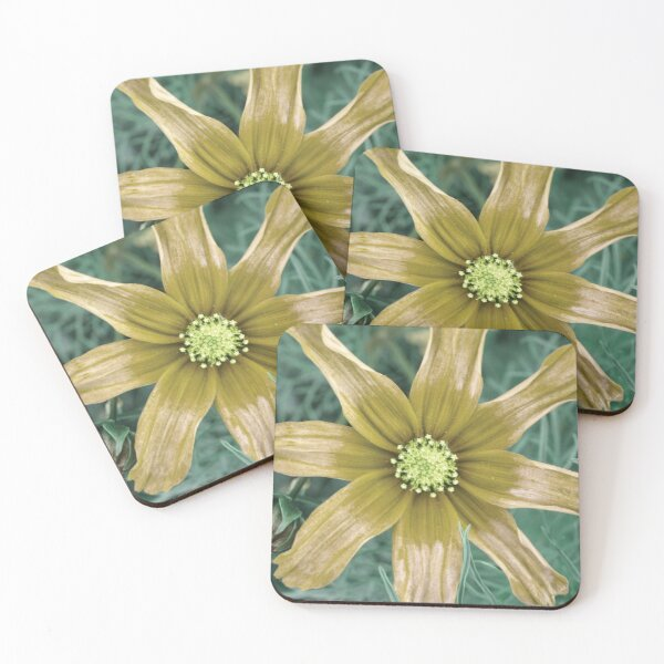 Sunstar Coasters (Set of 4)