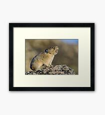 Hitting the High Note! Framed Print