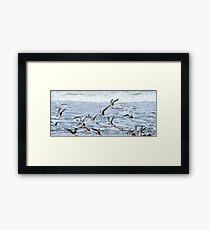 Terns Framed Print