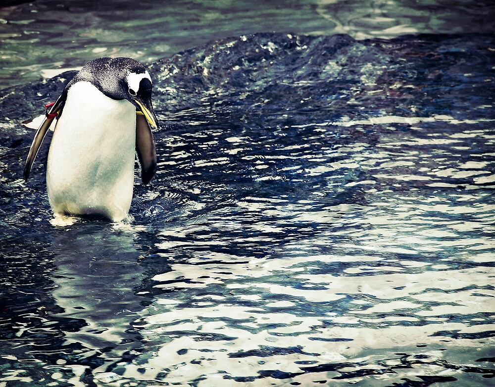 Contemplating Penguin by Davgoss