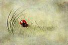 Lady Bird by Svetlana Sewell