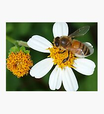 Bee business Photographic Print