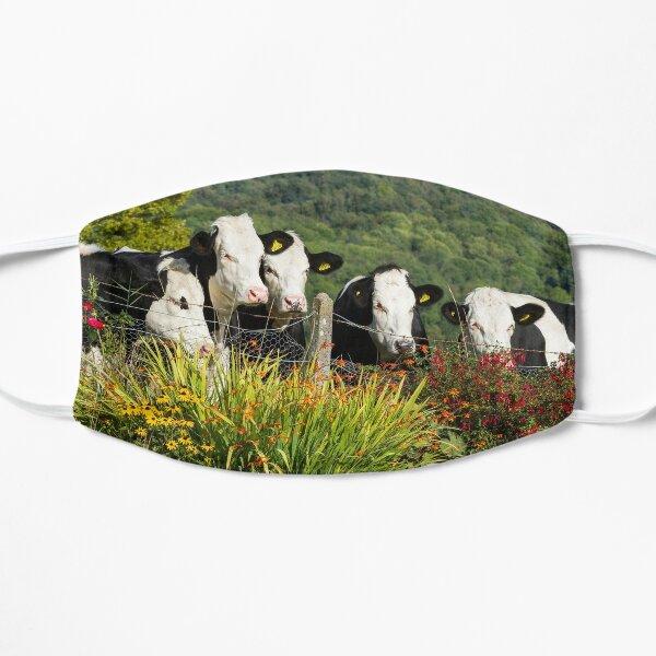 Hereford Holstein Cross Cattle Flat Mask