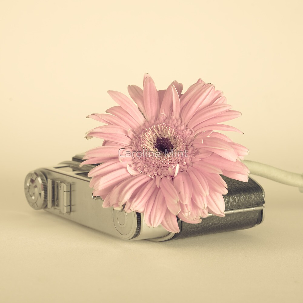 Pink Flower and Camera  by Caroline Mint