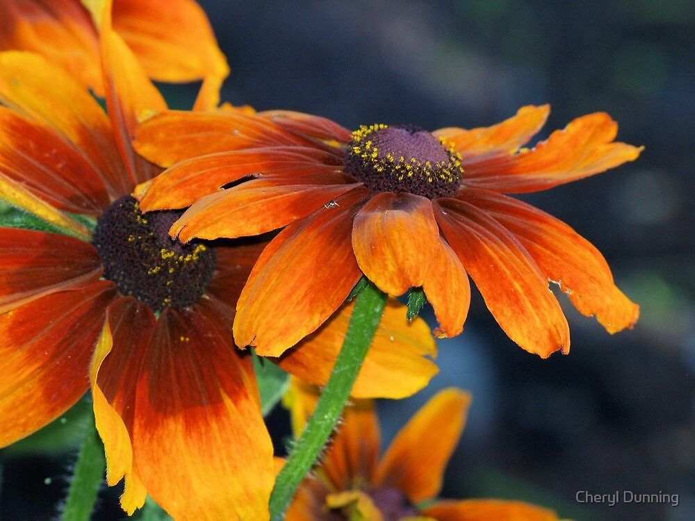 floral view by Cheryl Dunning
