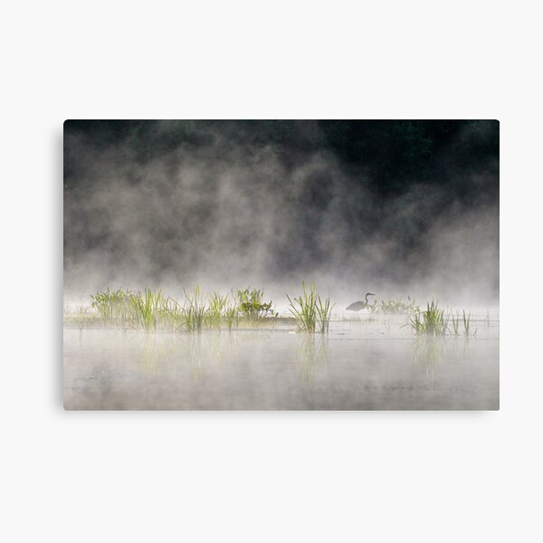 Heron in the Mist Canvas Print