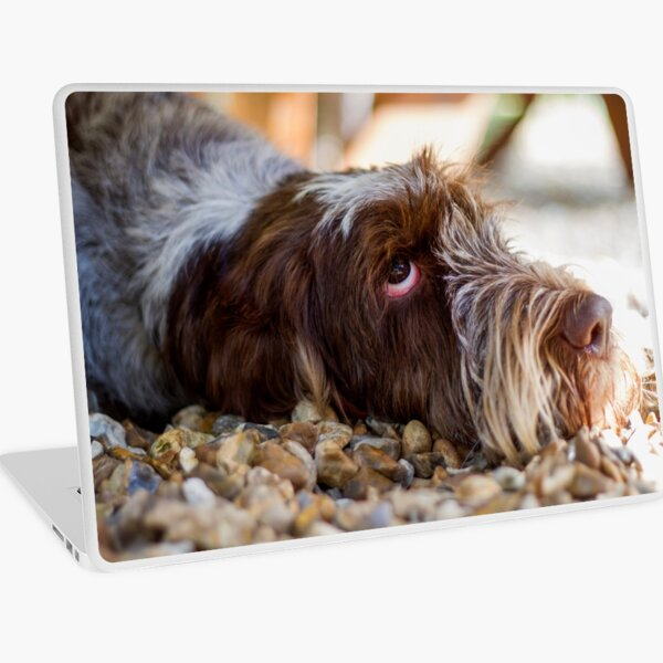 Looking up Spinone Laptop Skin