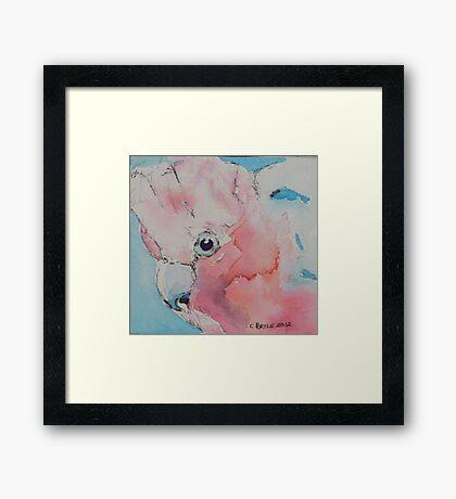 Galah Framed Print