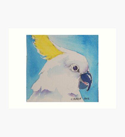 Cockatoo too Art Print