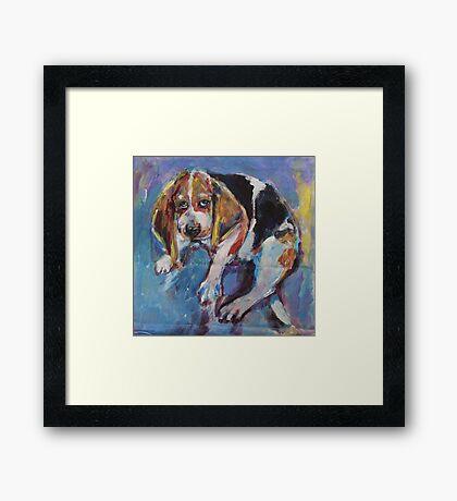 Bashful beagle Framed Print