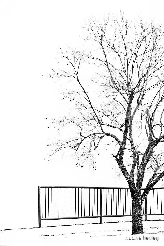 Tree in winter by nadine henley